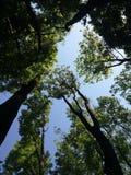 底部照片点天空结构树 免版税库存照片