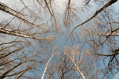 从底部的树 库存照片