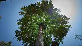 从底部的棕榈视图 库存图片