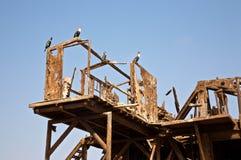 废墟在沙漠 免版税库存图片
