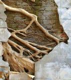 废墟混凝土墙 免版税库存照片