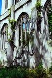 废墟的哥特式窗口用常春藤/修道院的盖的一个老教会 免版税库存照片