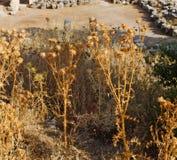 废墟石头和剧院安塔利亚arykanda火鸡亚洲天空的a 库存图片