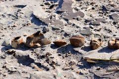 废弃物和残骸在海滩 免版税库存图片