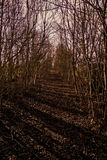 废弃的铁路 免版税库存照片