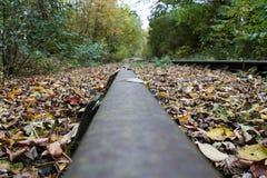 废弃的railtrackovergrown 库存照片
