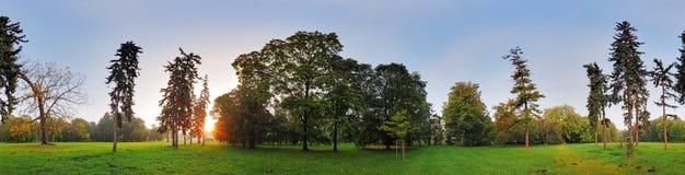 360度全景,森林在公园 免版税库存照片