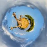 360度观点的长颈鹿在肯尼亚的国家公园 图库摄影
