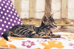 度过一懒惰天的幼小小猫在阳光下 免版税库存图片