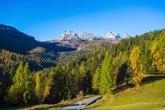 5座torri山看法在从在秋天风景在白云岩,意大利的Falzarego通行证看的背景的 山,冷杉tr 免版税库存照片