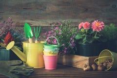 庭园花木和花幼木在花盆 喷壶,桶,铁锹,犁耙,手套 库存照片