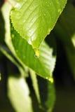 庭园花木在雨珠 库存照片