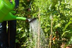 庭园花木夏天浇灌的妇女 免版税库存照片
