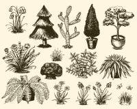 庭园花木导航从事园艺和种植与装饰树或花开花的被种植的户外例证 库存例证