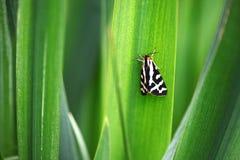 庭院与闭合的翼的灯蛾 免版税库存图片
