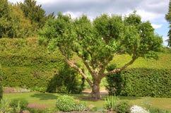 庭院使结构树环境美化 库存照片