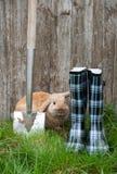 庭院兔子 库存照片