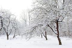 庭院冬天 库存图片