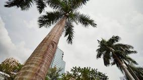 庭院和摩天大楼被看见在阿亚拉三角在马卡蒂停放,马尼拉大都会 股票视频