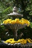 庭院喷泉的黄色妈咪 免版税库存照片