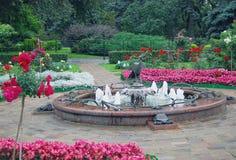 庭院在克里姆林宫 横向孔雀夏天视图 库存图片