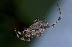 庭院在工作灼烧的午夜油,详细的宏观特写镜头,大夜场面的天体蜘蛛 免版税库存照片