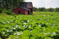 庭院在新罕布什尔增长 图库摄影