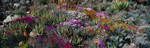庭院在春天,地球关心Ojai中心, Ojai,加利福尼亚 库存照片