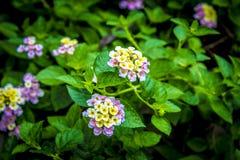 庭院在泰国Chatuchak 6 库存照片