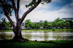庭院在泰国Chatuchak 19 库存照片
