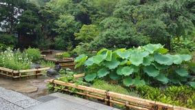 庭院在雨天 库存图片
