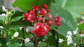 庭院在轻轻地摇摆在微风的雨中开花 影视素材