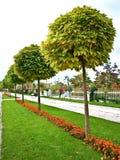 庭院在Olomouc 库存图片