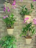 庭院垂直 库存图片