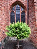 庭院大教堂在Pelplin 免版税库存图片