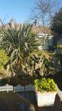 庭院天堂花树自然自然池塘鱼水特点罐安置装饰 库存图片