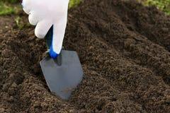 庭院妇女工作 种植与在h的一把小铁锹 免版税图库摄影