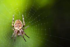 庭院宏观蜘蛛网 免版税库存图片