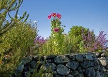 庭院岩石场面墙壁 库存照片