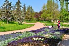 庭院工作在花床上在公园 免版税图库摄影