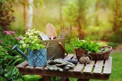 庭院工作静物画在夏天 春黄菊花、手套和工具在室外木的桌上 库存照片