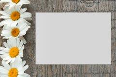庭院开花在木背景的雏菊与您的文本的地方 复制空间 免版税库存照片