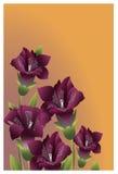 庭院开花在橙色背景的深紫红色颜色 库存图片