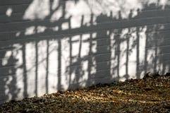 庭院影子 免版税库存照片