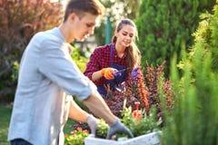 庭院手套的年轻人花匠在白色木箱把有幼木的罐放在桌上,并且女孩修剪 库存图片
