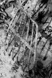庭院挖掘者 库存照片