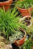 庭院新的春天 免版税库存照片