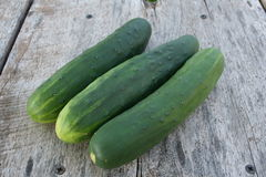 庭院新鲜的黄瓜4 库存照片