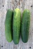 庭院新鲜的黄瓜5 免版税库存图片