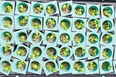 庭院无毒蔬菜 免版税图库摄影